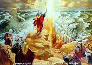 moses_red_40
